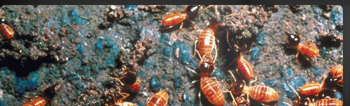 Fisk Brothers Termite & Pest Control | Oklahoma City, OK | Pest Controll Services